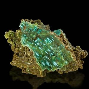 1220_chrysocolle_2